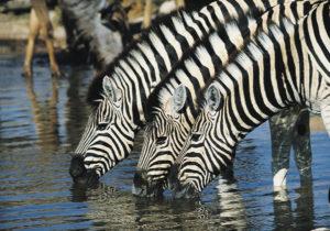 Copyright zambia tourism